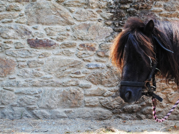 poney 3