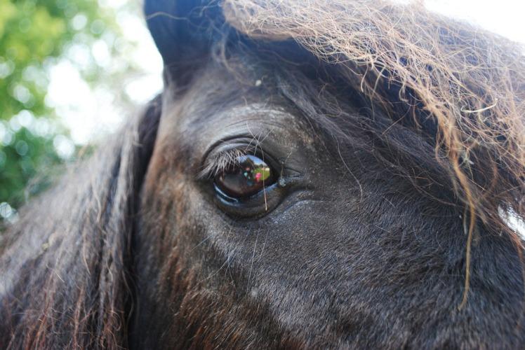 poney 7