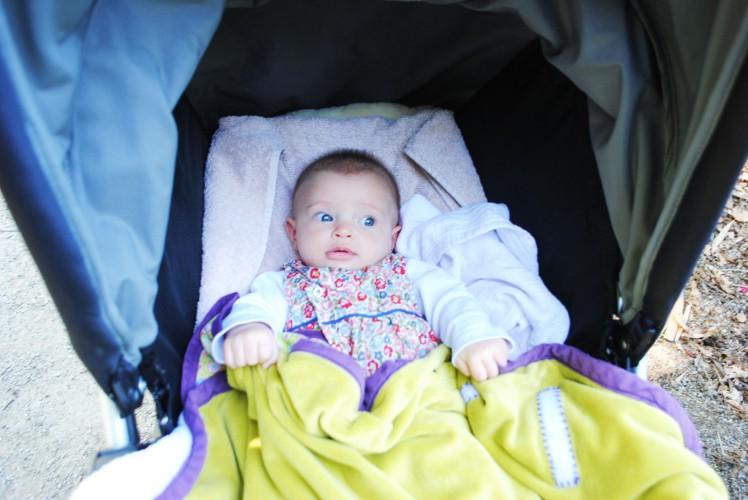 zoo de la bourbansais bébé