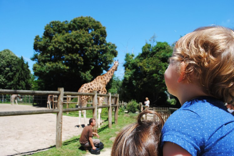 zoo de la bourbansais girafe