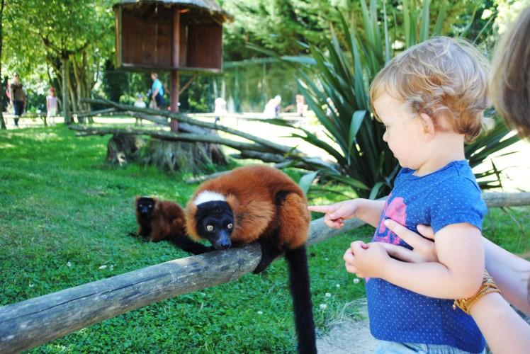 zoo de la bourbansais lemurien