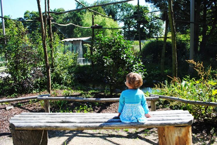 zoo de la bourbansais seul