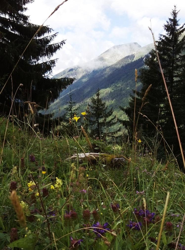 La montagne en été ...